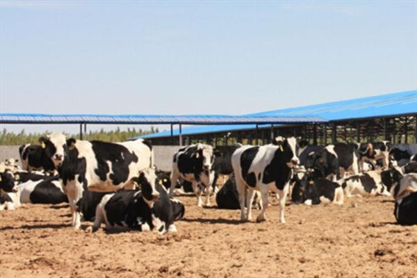 Effects of YeaVita R on feed digestibility and milk yield of dairy cows