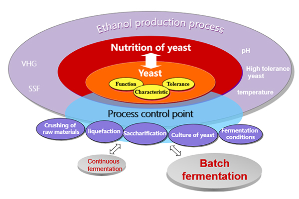 The key factors in the ethanol production of VHG