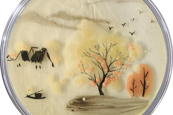 Appreciate the Charm of the Chinese Artworks Created with Microorganisms!