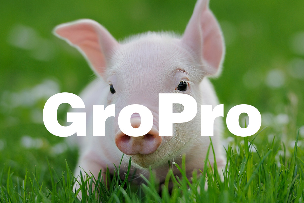 Functions and Applications of GroPro in Piglet Diet, a High-Quality Yeast Hydrolysate Protein Source